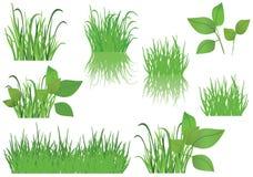 Conjunto de hierba verde Fotos de archivo
