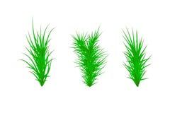 Conjunto de hierba verde Fondo del blanco de la hierba verde Ilustración del vector stock de ilustración