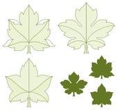 Conjunto de hojas Imagenes de archivo
