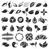 Conjunto de hojas Imagen de archivo libre de regalías
