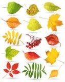 Conjunto de hojas coloridas Foto de archivo libre de regalías