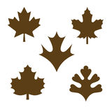 Conjunto de hojas de arce Fotos de archivo