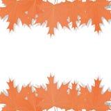 Conjunto de hojas de arce libre illustration