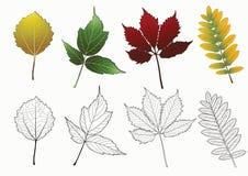 Conjunto de hojas de otoño. Foto de archivo