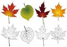 Conjunto de hojas de otoño. Imagen de archivo libre de regalías
