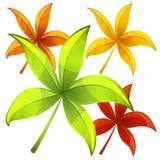 Conjunto de hojas de otoño Foto de archivo libre de regalías