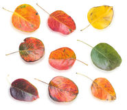 Conjunto de hojas de otoño coloridas Foto de archivo