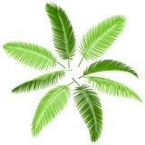 Conjunto de hojas de palma stock de ilustración