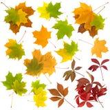 Conjunto de hojas del autunm Imagenes de archivo