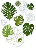 Conjunto de hojas del philodendron Foto de archivo libre de regalías