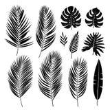 Conjunto de hojas de palma Plantas tropicales Colección del vector stock de ilustración