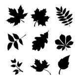 Conjunto de hojas Siluetas negras del vector Fotos de archivo
