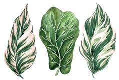 Conjunto de hojas tropicales Selva, ejemplos botánicos de la acuarela, elementos florales, helecho y otros stock de ilustración