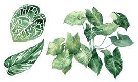 Conjunto de hojas tropicales Selva, ejemplos botánicos de la acuarela, elementos florales, hojas de palma, helecho y otros stock de ilustración