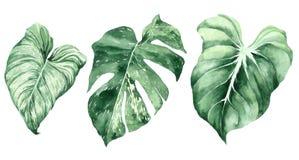 Conjunto de hojas tropicales Selva, ejemplos bot?nicos de la acuarela, elementos florales, hojas de palma, helecho y otros stock de ilustración
