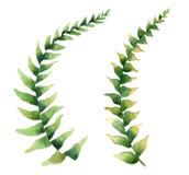Conjunto de hojas tropicales ilustración del vector