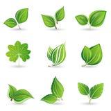 Conjunto de hojas verdes Imagenes de archivo