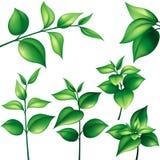 Conjunto de hojas verdes Imágenes de archivo libres de regalías