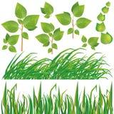 Conjunto de hojas y de hierba del verde Foto de archivo
