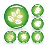 Conjunto de iconos del Web con las hojas Foto de archivo