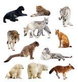 Conjunto de imágenes de depredadores Imágenes de archivo libres de regalías