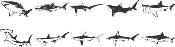 Conjunto de imagen de tiburones Fotografía de archivo
