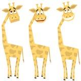 Conjunto de jirafas Foto de archivo