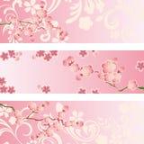 Conjunto de la bandera del flor de cereza Foto de archivo libre de regalías