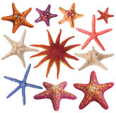 Conjunto de la estrella de mar pintada Foto de archivo libre de regalías
