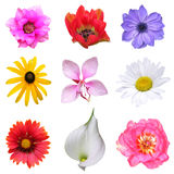 Conjunto de la flor Imagenes de archivo