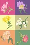 Conjunto de la flor del resorte Fotografía de archivo