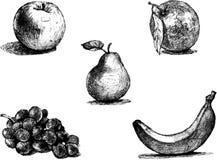 Conjunto de la fruta Dibujos lineales realistas ilustración del vector