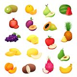 Conjunto de la fruta Ejemplo del vector de la historieta de la cosecha fresca de la granja del diseño colorido Imagen de archivo