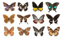 Conjunto de la mariposa Fotografía de archivo