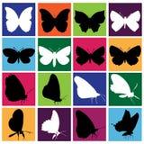 Conjunto de la mariposa Imagen de archivo libre de regalías