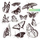 Conjunto de la mariposa. Imagen de archivo libre de regalías