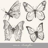 Conjunto de la mariposa Imágenes de archivo libres de regalías