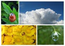 Conjunto de la naturaleza Foto de archivo libre de regalías