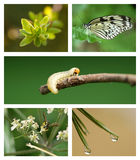 Conjunto de la naturaleza Fotografía de archivo libre de regalías