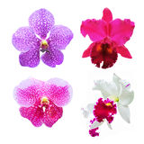 Conjunto de la orquídea de la flor (Cattleya, Vanda) Fotos de archivo