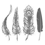 Conjunto de la pluma libre illustration