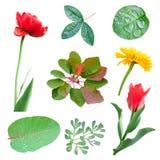 Conjunto de la primavera de hojas y de flores Imagen de archivo libre de regalías