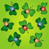 Conjunto de ladybugs coloridos en las hojas verdes Imagen de archivo libre de regalías