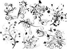 Conjunto de los elementos florales para el diseño,   ilustración del vector