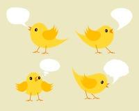 Conjunto de los polluelos amarillos de Twittering. Fotos de archivo