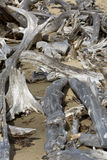 Conjunto de madeira lançada à costa descorada em um Sandy Beach, lago flagstaff fotografia de stock royalty free