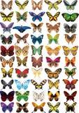 Conjunto de mariposas Imagen de archivo