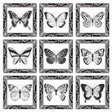 Conjunto de mariposas Imagen de archivo libre de regalías