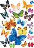 Conjunto de mariposas Imagenes de archivo