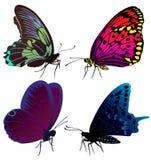 Conjunto de mariposas del color de tatuajes Fotografía de archivo
